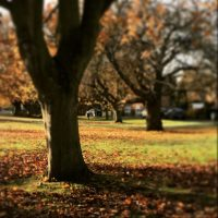 Autumn, Bottesford