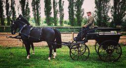 D K Carriage Horses
