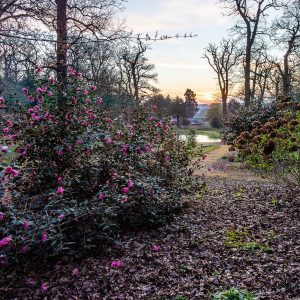 "Friday 5th April 2019  Picture Credit Charlotte Graham  Picture Shows  Early Morning light on the Belvoir Castle Estate and in Duchess's Spring Gardens that have been replanted over the last 5 years and were originally designed by Capability Brown. Belvoir Castle (/ˈbiːvər/ (BEE-vər ) is a stately home in the English county of Leicestershire, overlooking the Vale of Belvoir (grid reference SK820337). It is a Grade I listed building.A corner of the castle is still used as the family home of the Manners family and remains the seat of the Dukes of Rutland, most of whom are buried in the grounds of the mausoleum there. The castle remains privately owned, but is open to visitors. The castle is near several villages, including Redmile, Woolsthorpe, Knipton, Harston, Harlaxton, Croxton Kerrial and Bottesford and the town of Grantham. Antiquarian John Leland wrote in the 16th century, ""the castle stands on the very nape of a high hill, steep up each way, partly by nature, partly by the working of men's hands."""